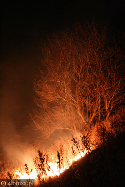 Foto: Bardzo sucho w lasach