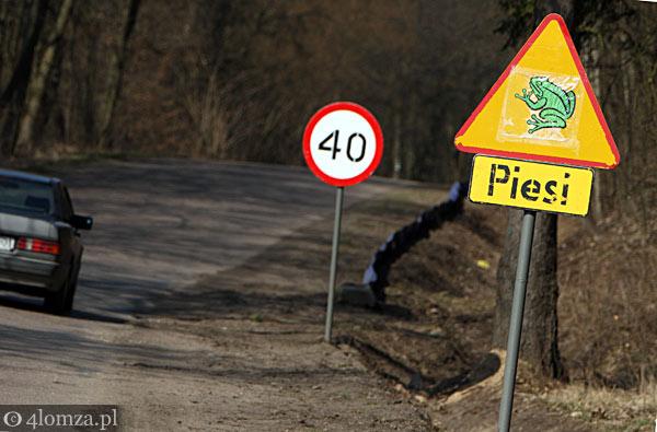 Foto: Łomża-Drozdowo: utrudnienia z powodu... żab