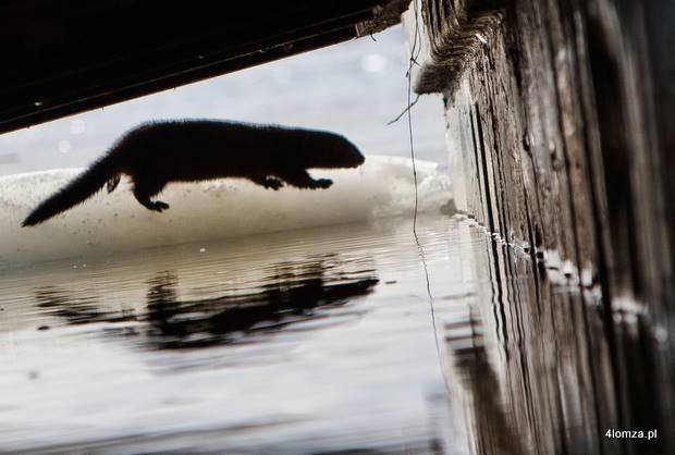 Foto: Ptaki nad Narwią i Biebrzą pod jeszcze większą ochroną