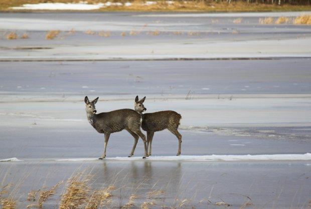Foto: Uwaga! Dzikie zwierzęta na drodze