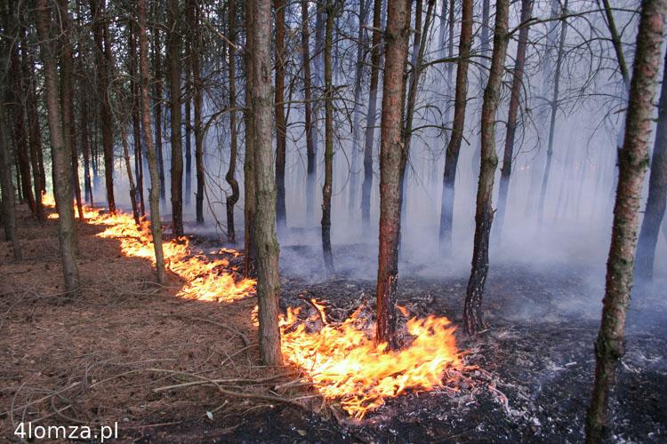 Foto: Lasy zagrożone jeszcze bardziej
