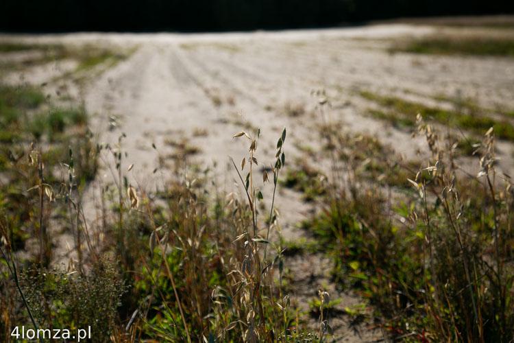 Foto: Komisja ds. strat suszowych