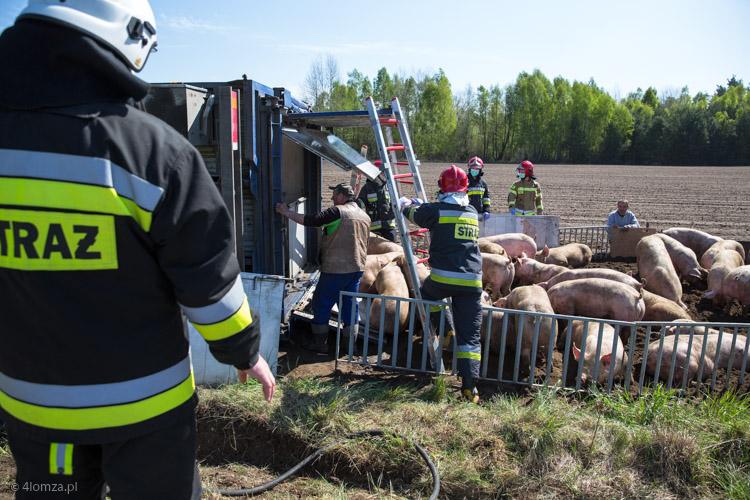 Foto: Świński wypadek